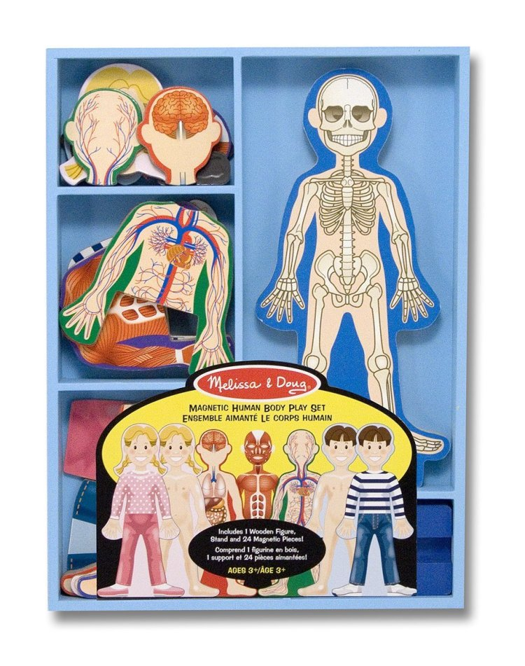 melissa and doug magnetic human body